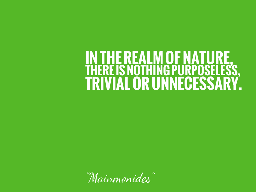IN THE REALM OF NATURE, THERE IS NOTHING PURPOSELESS, TRIVIAL OR UNNECESSARY.   alt=